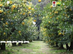 ゆずとりんてつWebサイト|愛知県豊根村[とみやま村]ゆず収穫隊|とみやまの柚子収穫