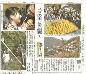 中日新聞に掲載頂きました|愛知県豊根村[とみやま村]ゆず収穫隊|とみやまの柚子収穫